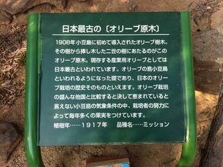 オリーブ原木の看板.JPG