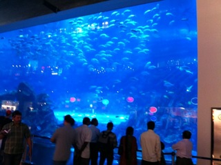 ドバイモール水族館.JPG